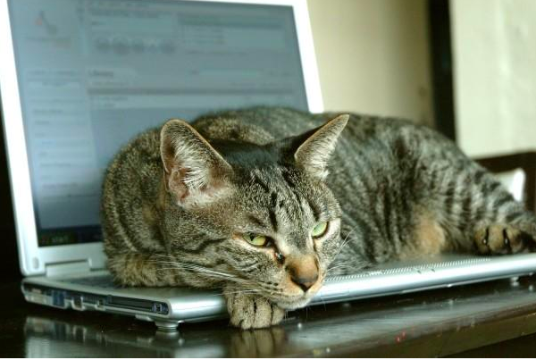 A cat lying on a laptop