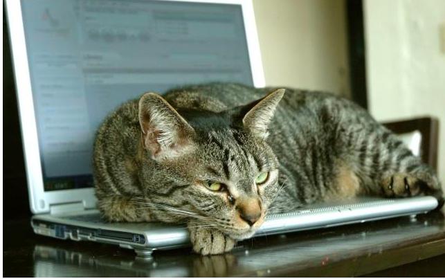 A cat lying on a laptop